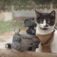 Cat Military