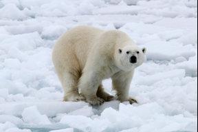 PolarBear123