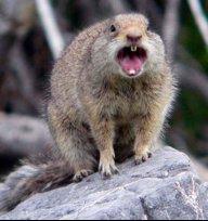 Squirrel001